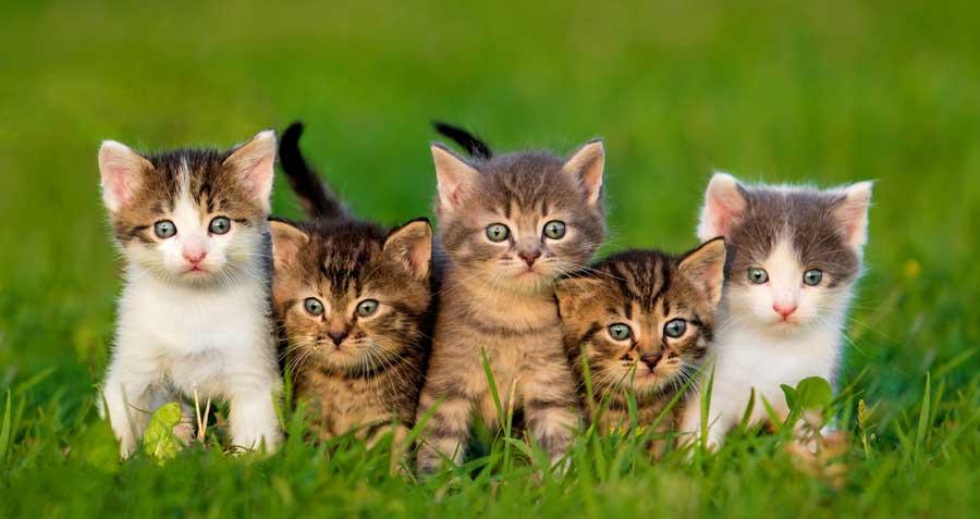 feline 5 personality traits