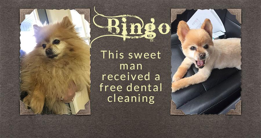 Bingo Pet dental health month
