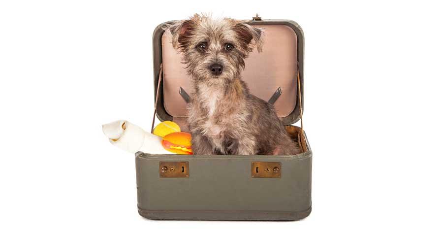 Boarding dog over holidays