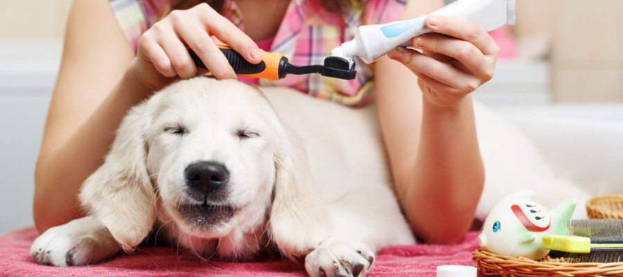 Brushing dogs teeth