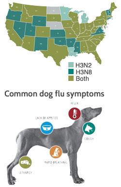 Canine Influenza Feb 2017