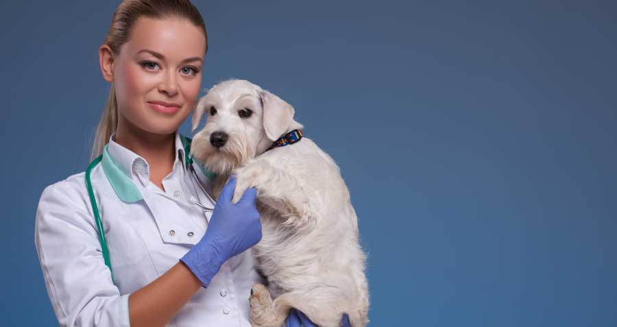 How to choose the right Vet