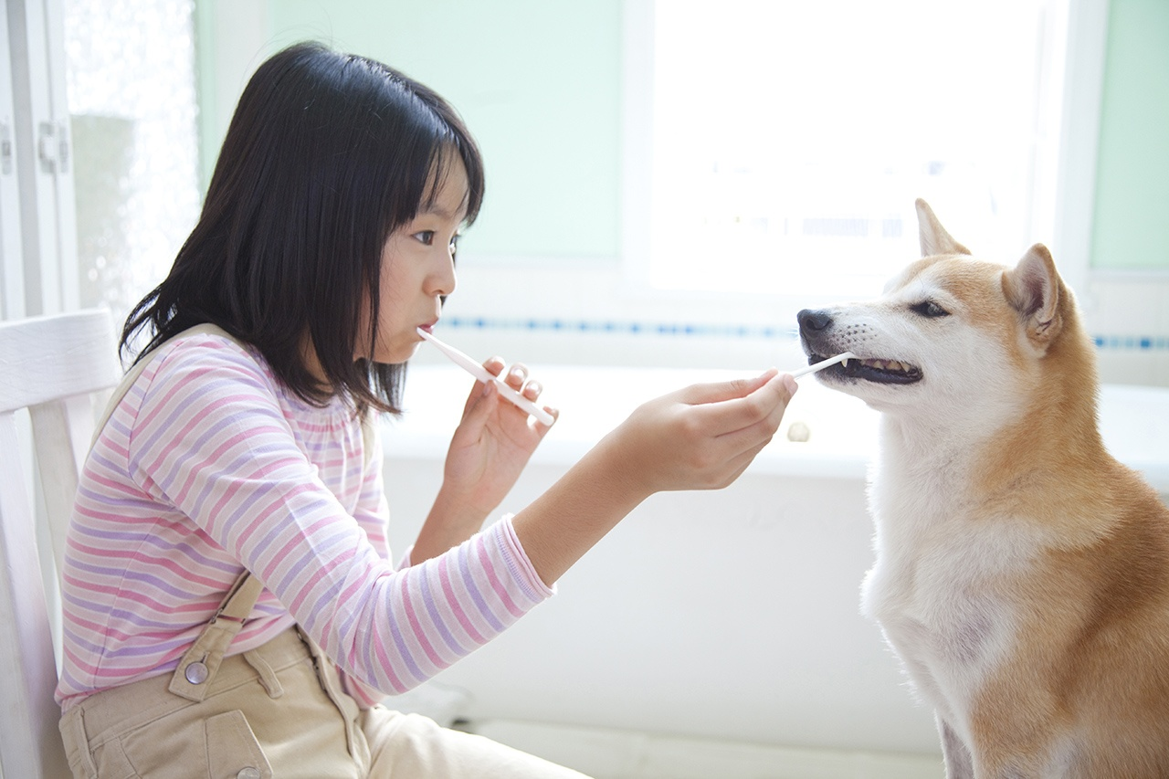 Pet Care Brush your dogs teeth