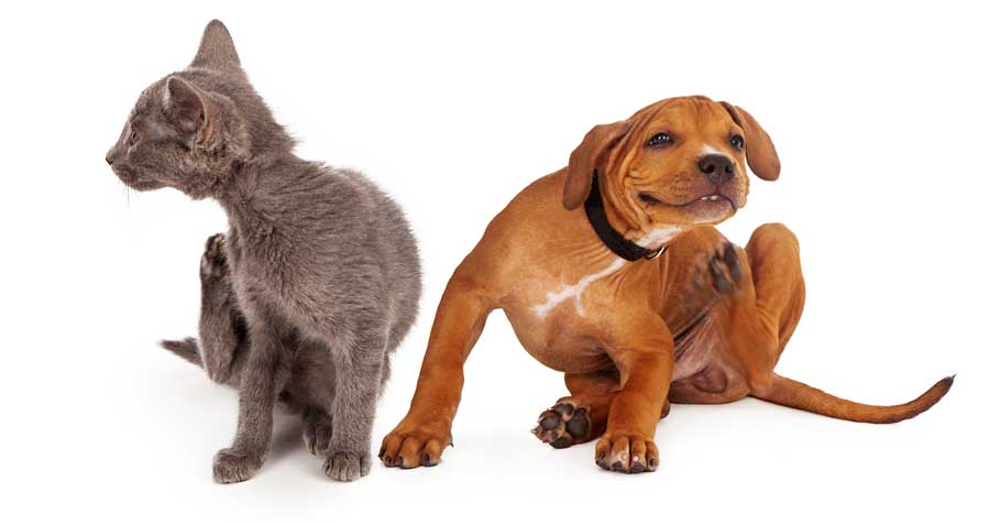 Dog and Cat- tching from flea and ticks