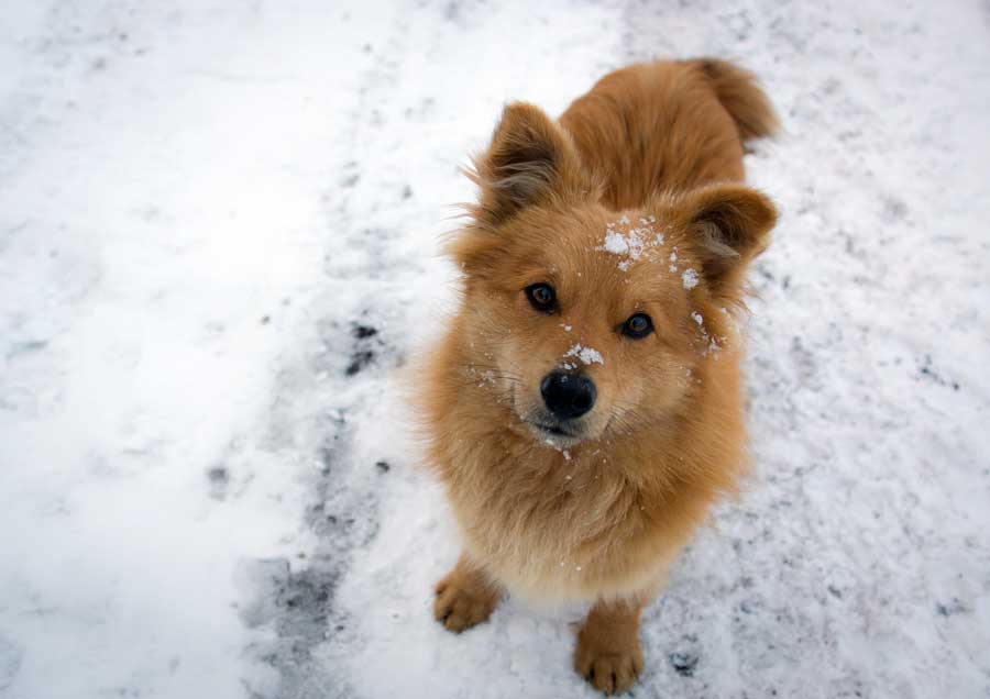 Keep dogs active during the winter