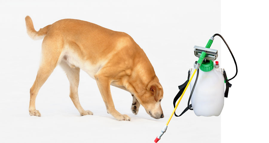 Dogs and insecticide