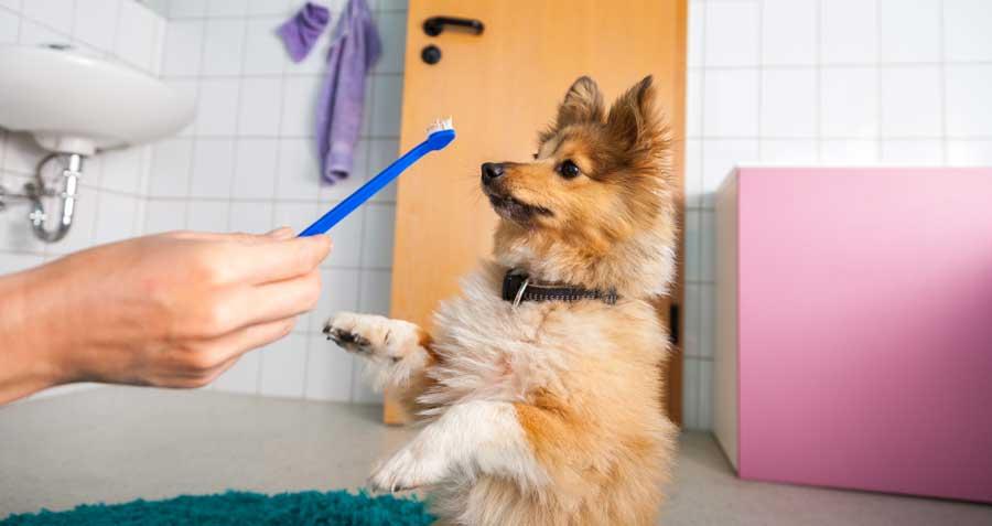 Dog dental health