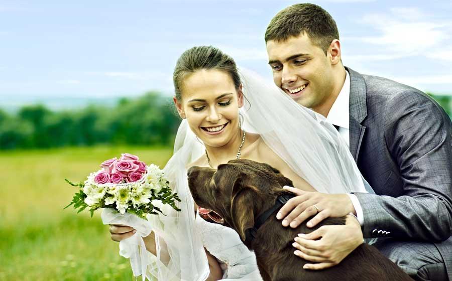 Pet in wedding