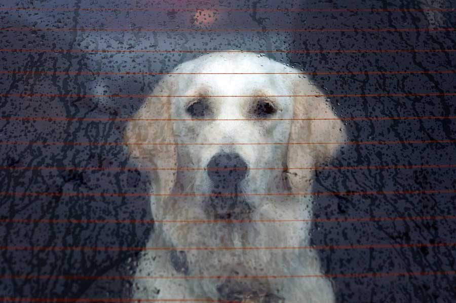 Dog and rainy day activities