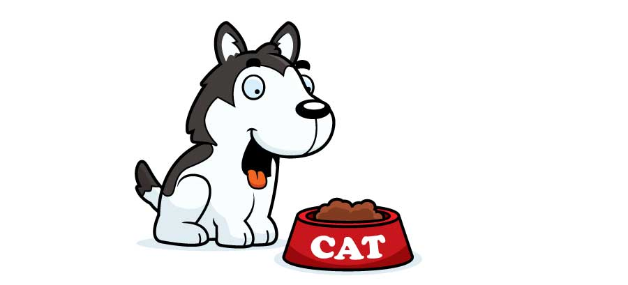 Dog with Cat Food