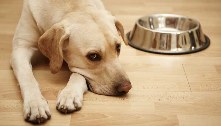 Dog alone by Water Bowl.jpg