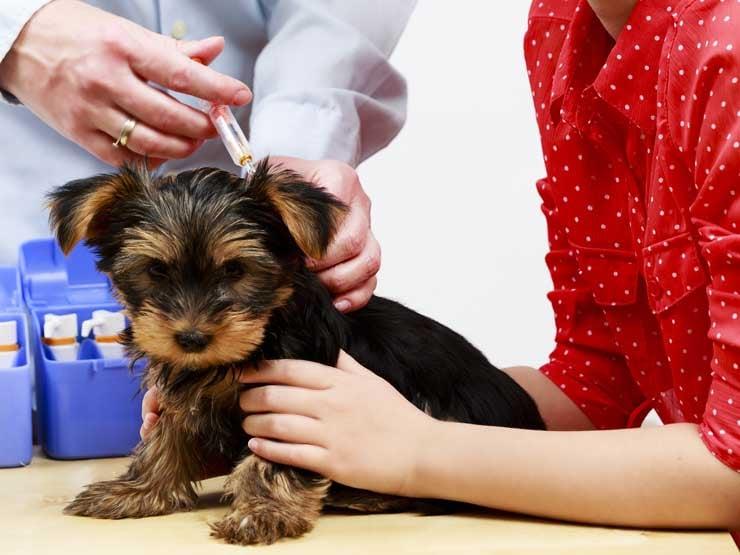 Pet Immunization