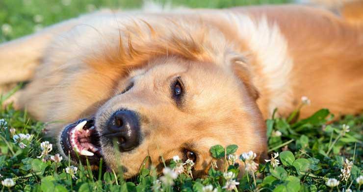 Pet Wellness Clinic