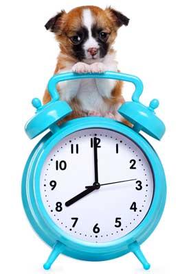 Dog Schedule