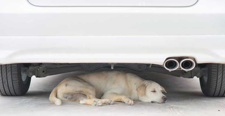 Protect your dog from the heat