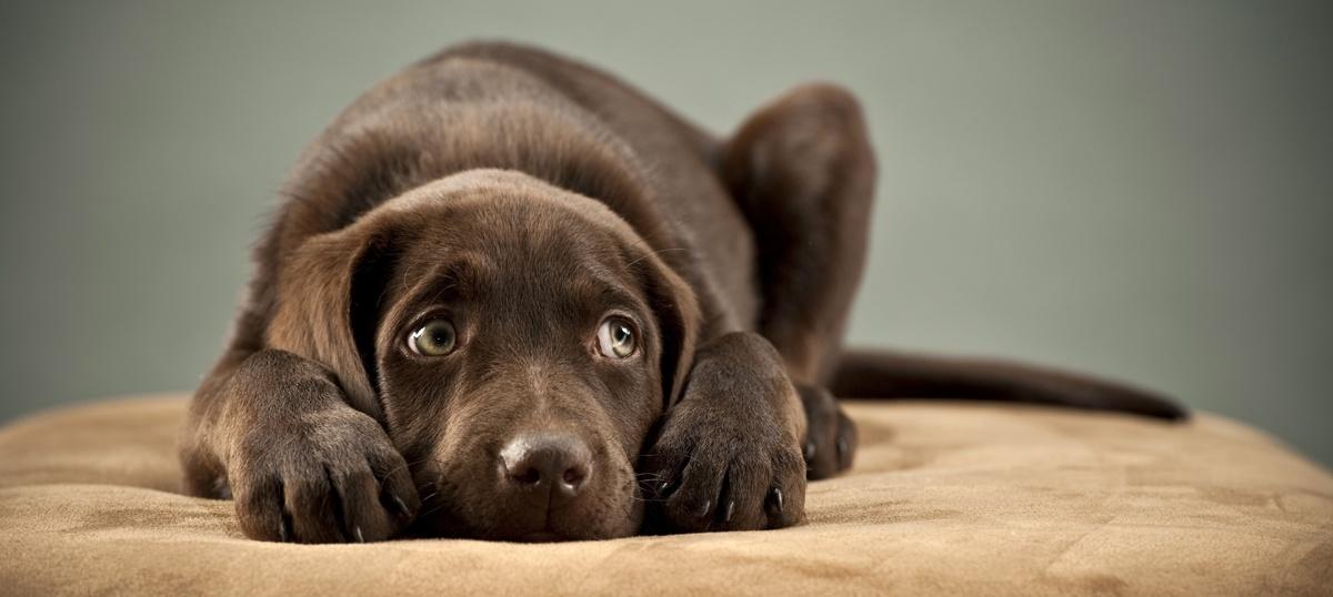 Pet Care and dog behavior