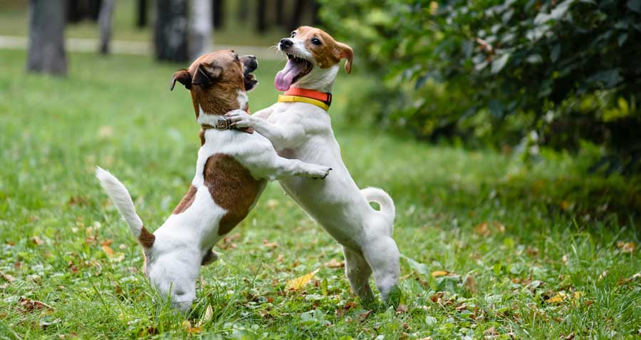 Doggie daycare Best Friends
