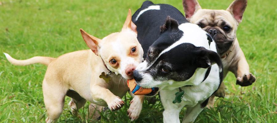 Dogs in Dog Daycare
