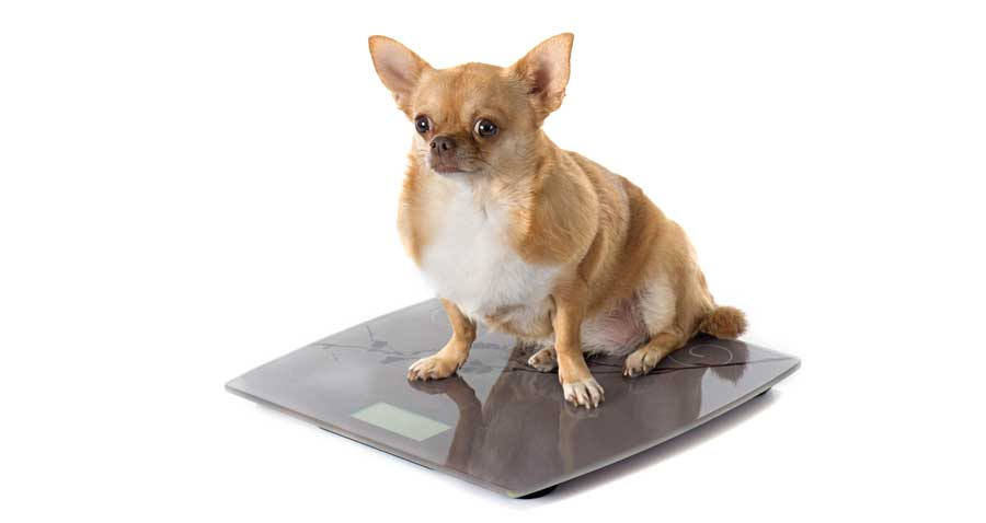 Is your pet overweight