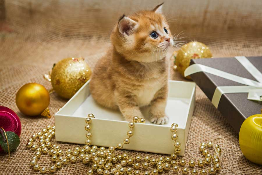 Kitten-As-Present.jpg