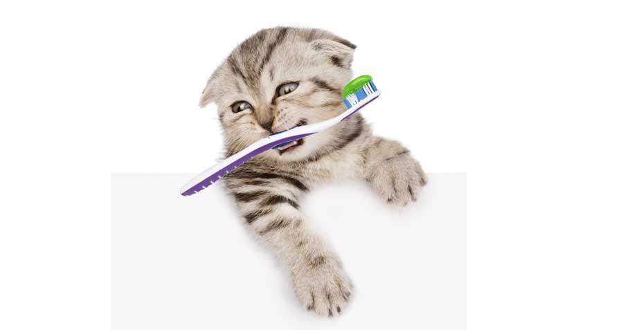 Kitty brushing teeth