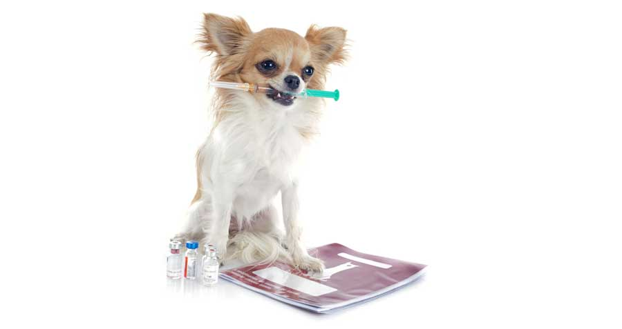 are your Pet Vaccinations current