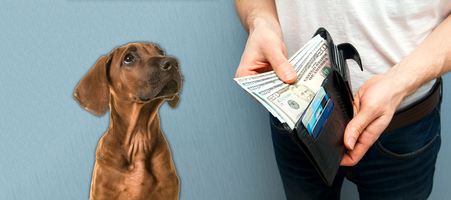 Pet dental cleaning and the cost