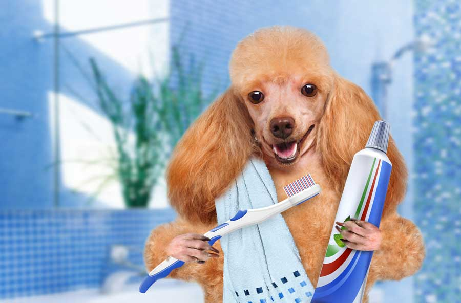 Pet dental health