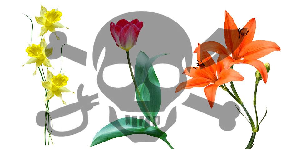 Poisonous Flowers for pets