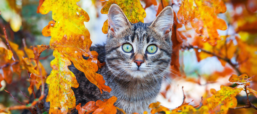 Protecting you Cat this fall