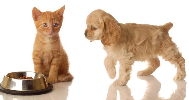 Keep your pet's food and water bowls clean.