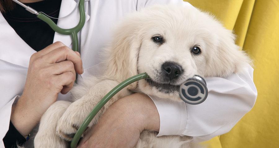 Puppy's 1st visit