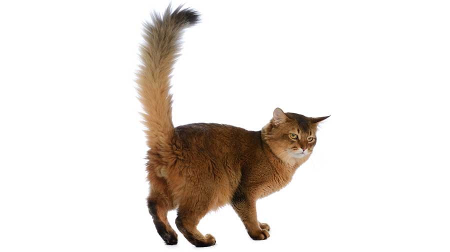 Pet care and you cats tail behavior