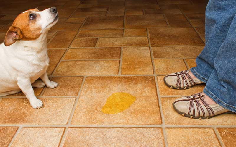 Pets and Bladder Infections