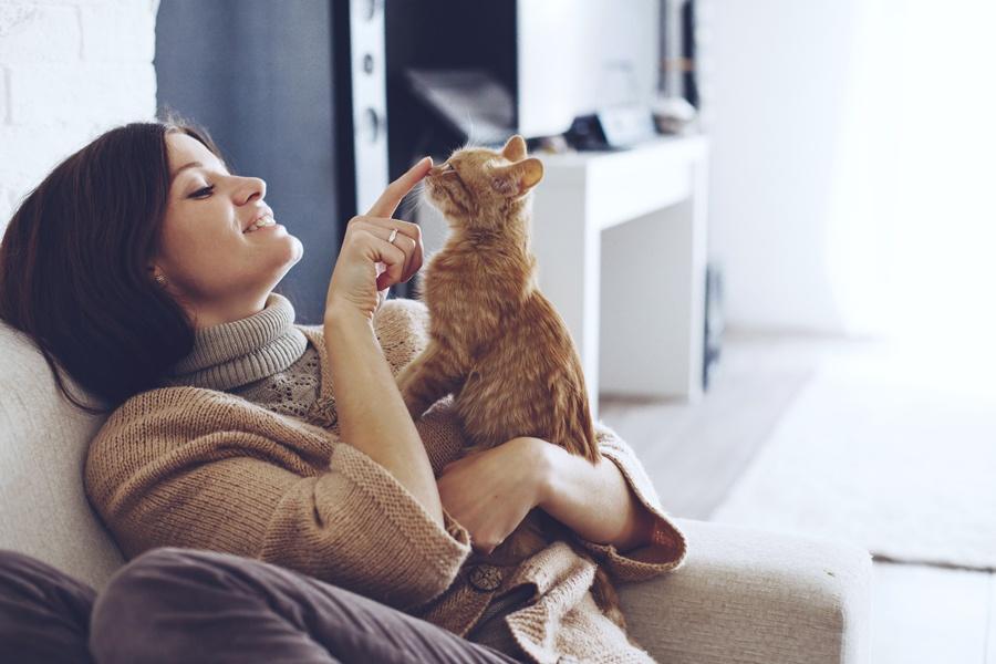 Feline Friendly Pet visits