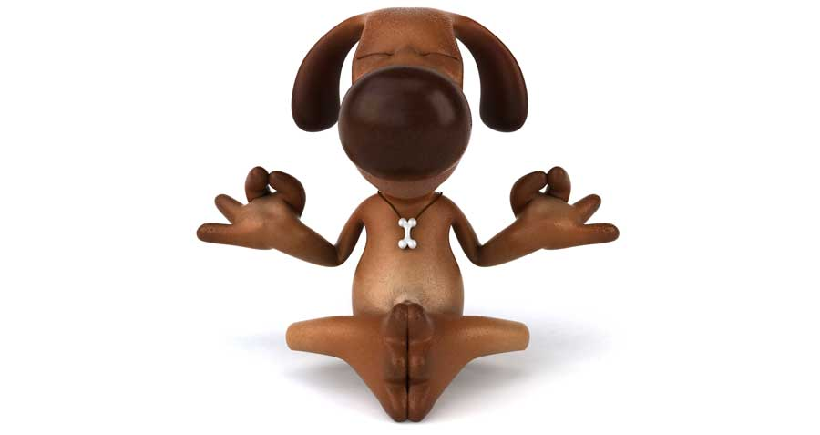 Zen dog and holistic vet care