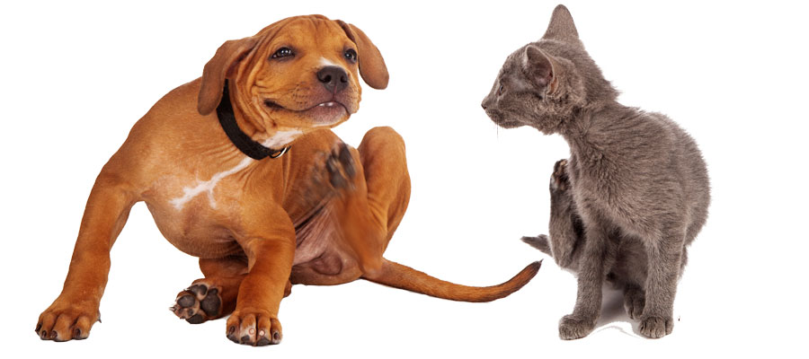 dog and cat fall allergies