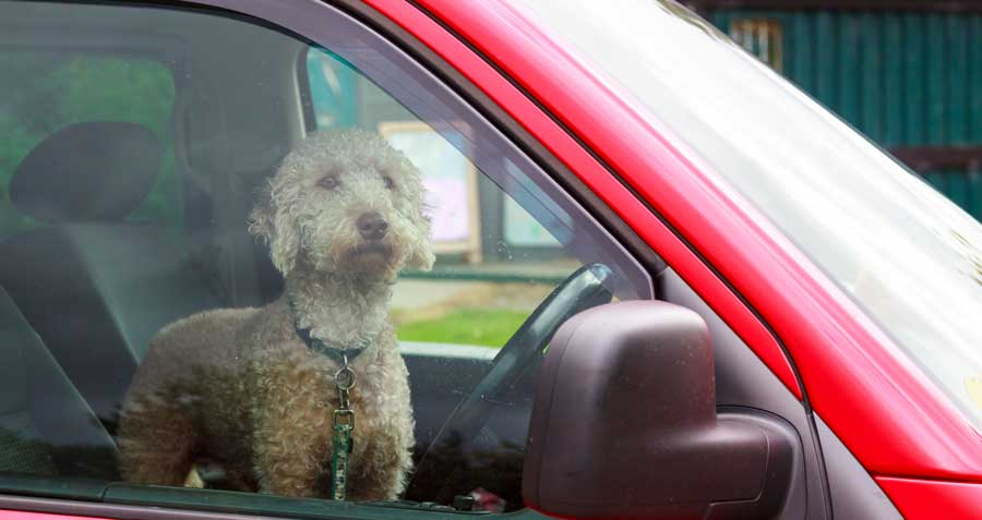 animal care and hot cars