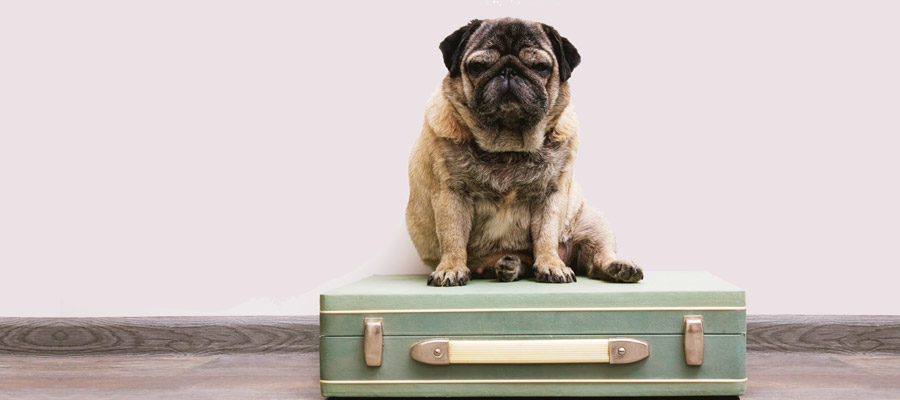 airplane travel with your dog