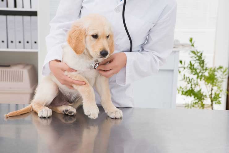 holistic veterinarians Boise
