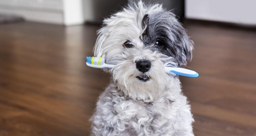 pet dental health tips and tricks