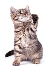 Fear free kitten