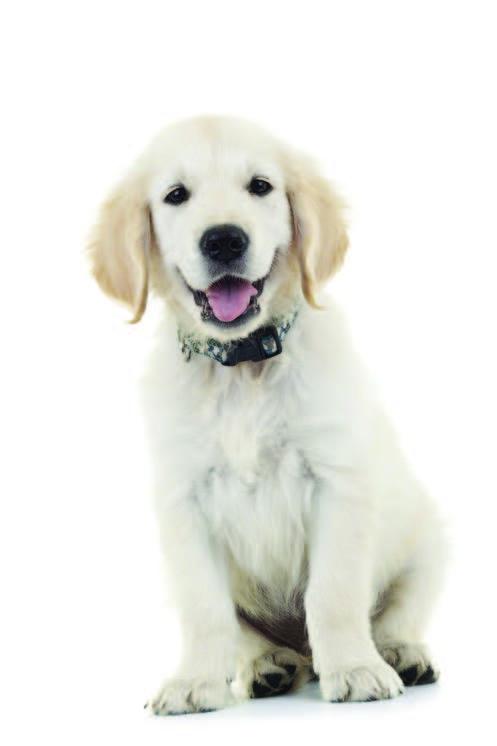 Fear free puppy