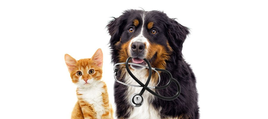 Dog- and Cat with Stethoscope