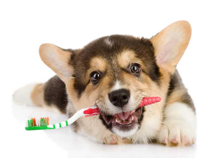 National pet dental month