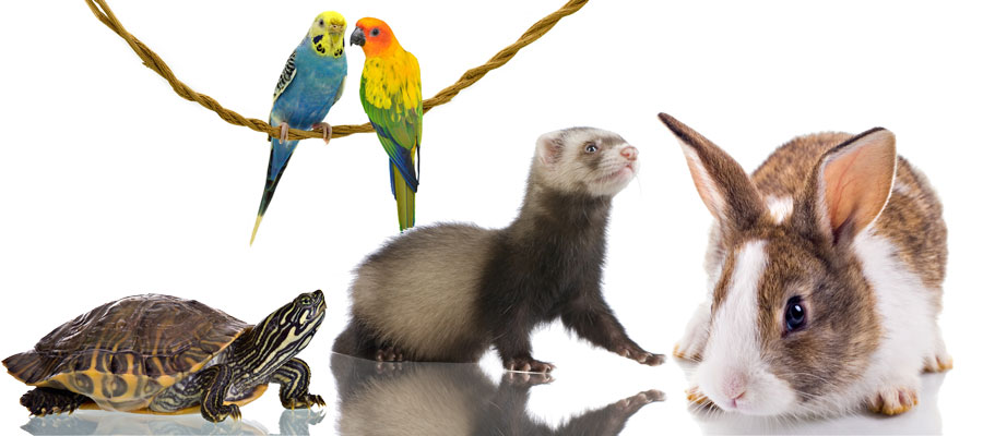 Exotic, bird, and small mammal care