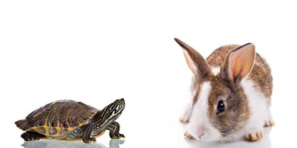 Small and exotic Pets