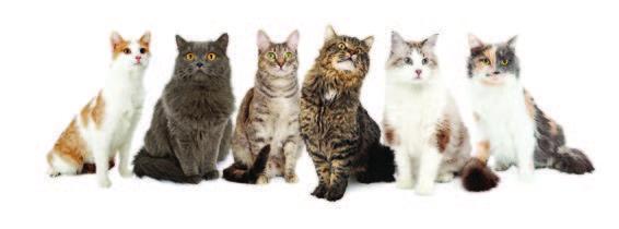 Lots-of-Cats.jpg