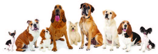 Lots-of-Dogs.jpg