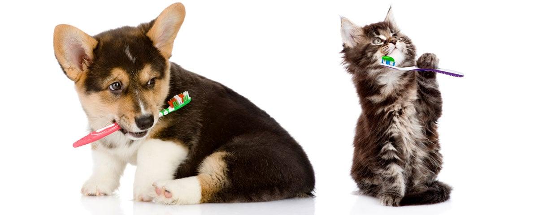 Puppy and Kitten brushing teeth